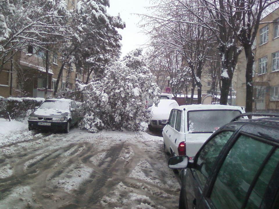 Fotograma zilei in Satu Mare !!!