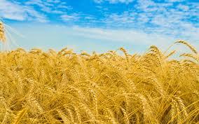 Din 2014 strainii pot  cumpara terenuri in Romania