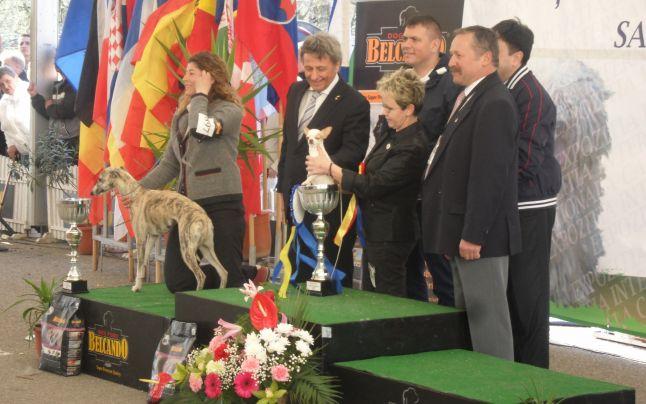 Peste 2.000 de câini de rasă, la două expoziţii organizate în acest weekend la Satu Mare