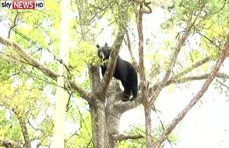 O ursoaică cu 3 pui a fost văzută în zona de munte a județului Satu Mare. Ce să faceți cand vă întâlniți cu animalele salbatice