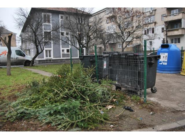 Acțiunea de strângere a brazilor de Crăciun în municipiul Satu Mare