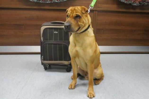 Un câine a fost găsit într-o gară din Scoţia, cu o valiză lângă el. Ce se afla în ea