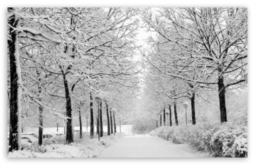 Prognoza meteo pe 2 săptămâni la Satu Mare