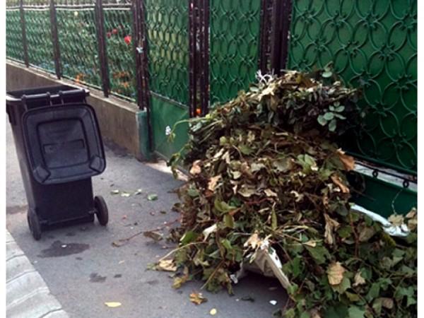 Din cauza condițiilor meteo nefavorabile, curățenia de toamnă în municipiul Carei a fost amânată