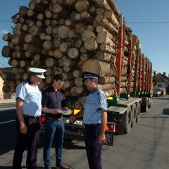 Politistii satmareni efectueaza controale pentru prevenirea si combaterea taierilor ilegale si a transportului de material lemnos