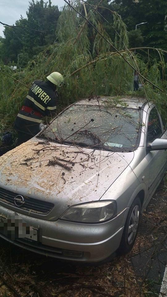 Copac cazut peste două autoturisme in Satu Mare