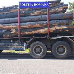 Polițiștii de ordine publică au confiscat 70,47 mc de material lemnos de pe raza județului Satu Mare