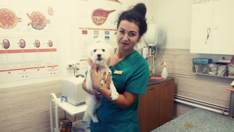 Samvet Satu Mare: De ce este importanta deparazitarea interna la caini si pisici