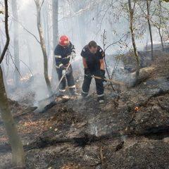 Ce tragedie! 3 hectare de padure s-au facut scrum in zona localității Bârsău. De la ce  a pornit focul