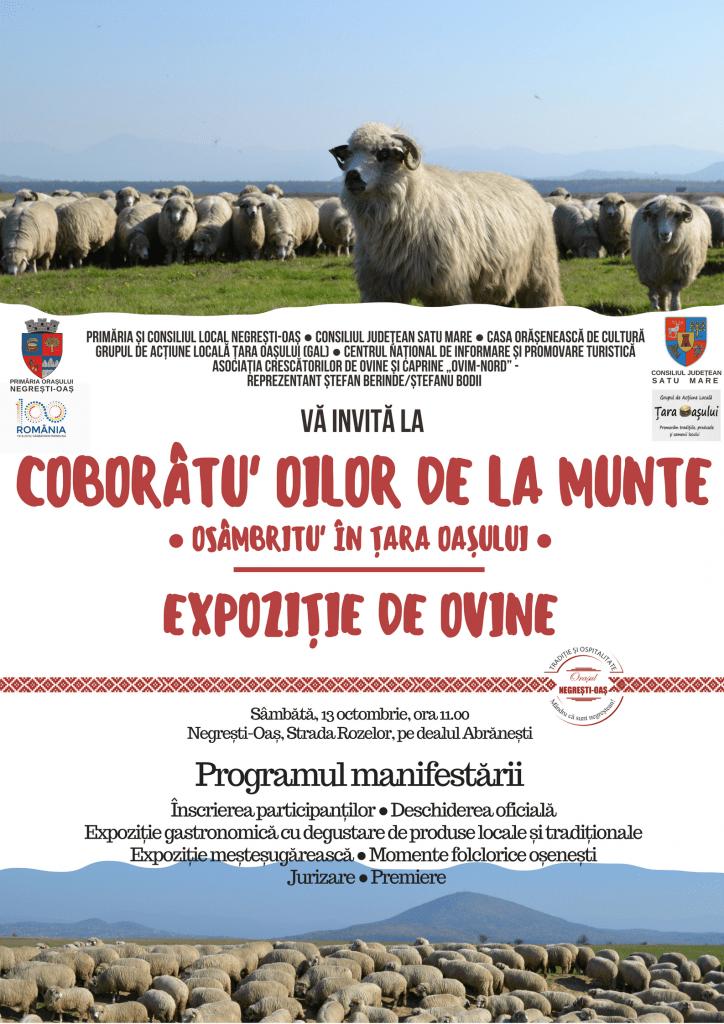 Coborâtu' oilor de la munte. Osâmbritu' în Țara Oașului – expoziţie de ovine