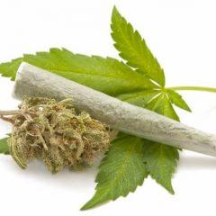 """Mesajul zilei din partea Poliției Satu Mare este pentru tineri: """"Maria, Marijuana"""""""
