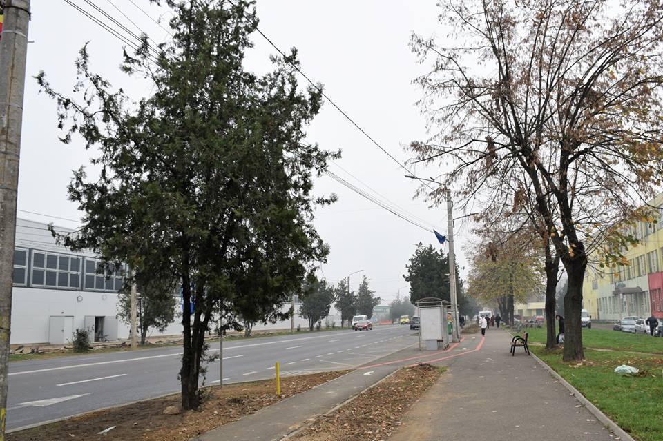 Primăria Municipiului Satu Mare plantează 68 de platani
