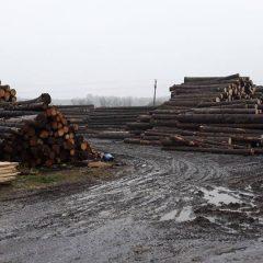 Polițiștii sătmăreni au confiscat peste 110 mc de material lemnos