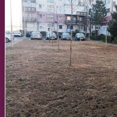Primăria Satu Mare derulează campania de plantări de toamnă