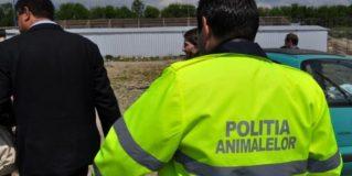Noi prevederi legale în domeniul protecției animalelor